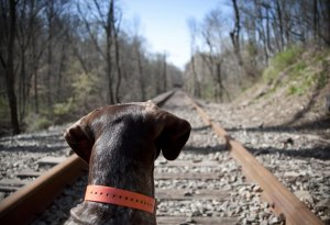 bailey-on-the-tracks.jpg