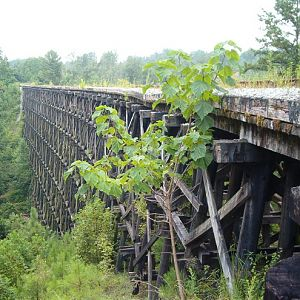 L&N Trestle over Newfound Creek